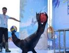 海洋展活动明细报价海狮表演大型海洋生物景观设计出租