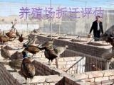 廣州鋼材廠損失評估,養羊場拆遷評估,苗圃賠償評估