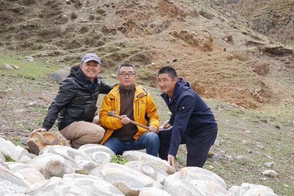 西藏那曲冬虫夏草产自青藏高原