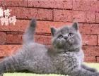 天天有折扣 回头客众多 蓝猫疫苗齐全