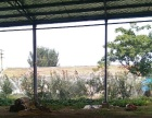 厂房出租 平度张戈庄镇 厂房 2000平米
