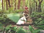 外景婚纱照中如何展现最美的一面
