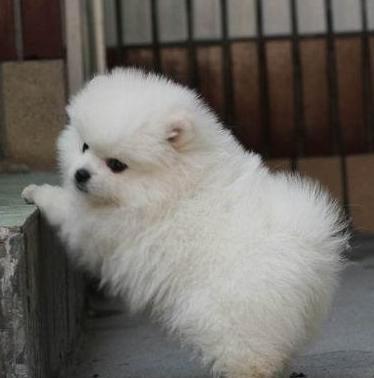 北京官方认证宠物领养中心 多品种狗狗赠送