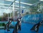 萌宠租赁海狮表演海洋生物展马戏团羊驼出租