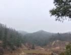 水源林地耕地230亩
