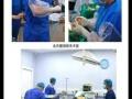 临沂伊贝宠物医院,用专业呵护爱宠健康成长