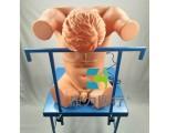 康为医疗高仿真背部(胸部)穿刺训练模型