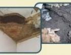 桥头白蚁防治所 企石灭治白蚁中心 麻涌白蚁防治站 专业高效
