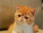 自家猫场繁殖各种世界名猫