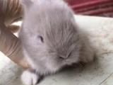 宠物兔养殖场