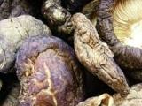 长期供应各种优质菌种干香菇干蘑菇 物美价廉
