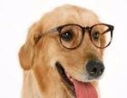 专业宠物美容,让您的宠物 艳惊四座