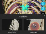 3D人体解剖图软件-维萨里解剖大师3Dbody