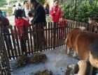 上海金山区设特兰小马租赁-矮马出租-矮脚马借租-房地产活动