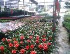有苗圃 专业鲜花绿植租摆 盆栽景观 绿化养护 景观设计