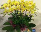 滨江区鲜花和绿植租摆