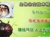 中华药鳖虫养殖加盟引进国外的优秀育种