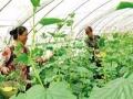 租块菜园自己种 吃天然蔬菜就来天怡山庄