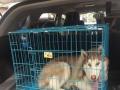 温州顺宠达宠物托运接温州至全国来回空运、汽运