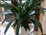 东莞寮步办公室植物租摆-东城室内绿植租赁A汇安园艺花卉出租