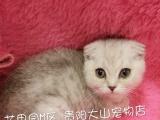 贵阳市出售各品种幼猫、支持贵州全省送货。包健康。