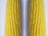 华珍甜玉米种