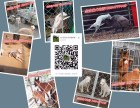 订购马犬送训练手册,马犬血统证书芯片均有,喜欢马犬的联系