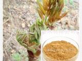 刺龙芽提取物 速溶粉 浓缩液 喷雾干燥粉 浸膏