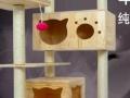超大170高实木猫爬架 居家小树屋