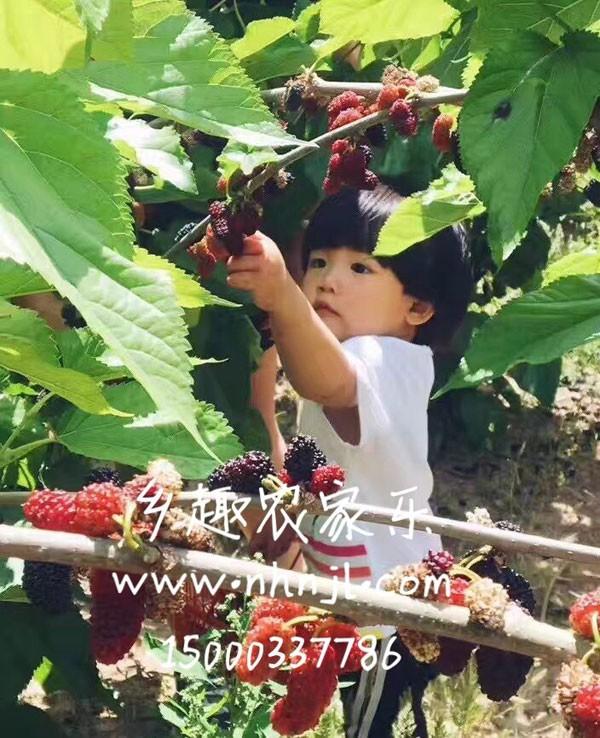 上海农家乐一日游推荐 采西瓜甜瓜 葡萄玉米 吃土菜钓龙虾