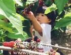 上海滴水湖农家乐推荐 采桑葚吃土菜 烧烤垂钓 划船住宿
