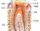 郑州花园口腔医院如何 给我一腔信任,还您一口好牙