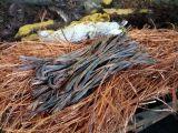 沈阳黄铜回收处黄铜紫铜亮铜回收洪金属市场大量回收