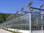高产高经济蔬菜种植与大棚