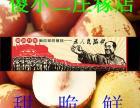 冬枣脆枣新鲜沾化有机富硒鲜果现摘现卖自然成熟超甜产地直供包邮