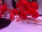 鱼缸 热带鱼 龙鱼 珊瑚小丑鱼