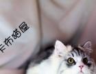 《卡布猫屋》精品猫咪出售中···