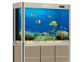 大型鱼缸,亚克力鱼缸,家庭生态鱼缸,风水鱼缸,免换水鱼缸