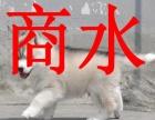 商水出售纯种的哈士奇犬,公母都有,可上门挑选狗狗可送货