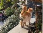 一只布偶猫多少钱 淘宝店铺搜:双飞猫