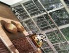 豪华别墅小区半岛别墅环境优雅 装修精致 私房菜会所不二之选