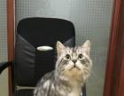 挪威森林猫,喜欢了联系