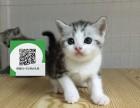 烟台哪里开猫舍卖虎斑猫 去哪里可以买得到纯种虎斑猫