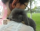 宠物兔 支持批发零售