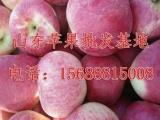 山东红将军苹果供应商红将军苹果,山东红富士苹果价格,