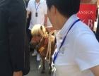 袖珍矮马出租上海启欣展览展示有限公司