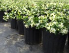 武汉花园绿化园林设计施工室内外花卉植物养维护苗木