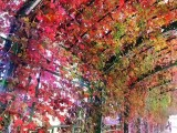 平谷金海湖两日游 京东大峡谷二日游 去平谷赏红叶二日游价格