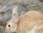 你养殖我回收宏源肉兔子