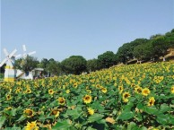 东莞农家乐野炊烧烤团体拓展休闲游松湖生态园多种玩法暑假嗨不停